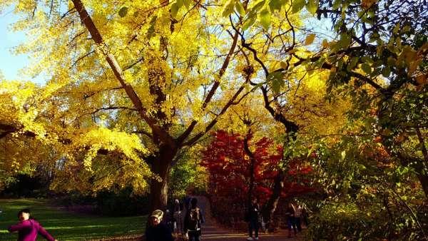 Fall in love: dove ammirare i più bei paesaggi autunnali