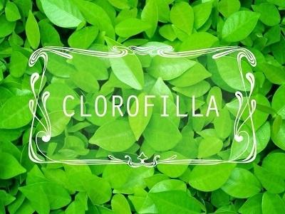 Logo Clorofilla