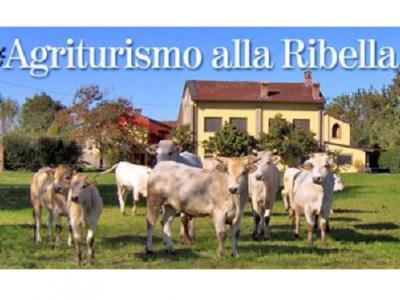 Logo Alla Ribella
